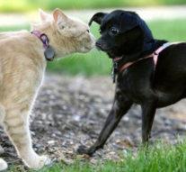 Как подружить кошку и собаку в одном доме