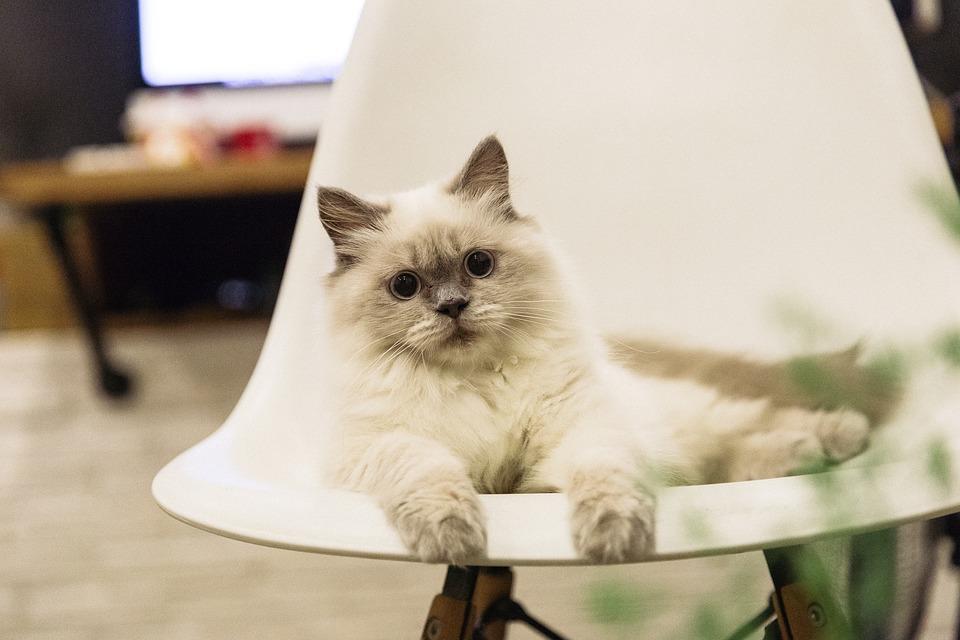 Какое домашнее животное лучше завести в квартире